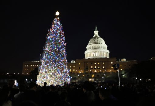 The U.S. Capitol Christmas Tree is pictured against a backdrop of the U.S. Capitol Building in Washington